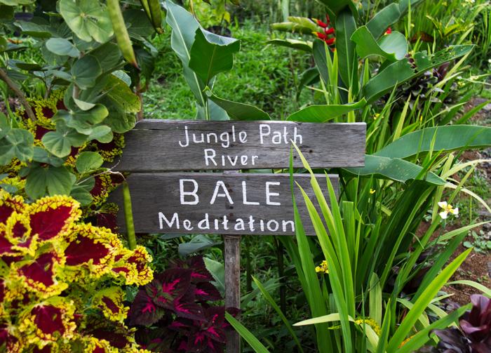 Tales-Wandering-Souls-Yoga-Surf-Coconuts-Bale-Meditation